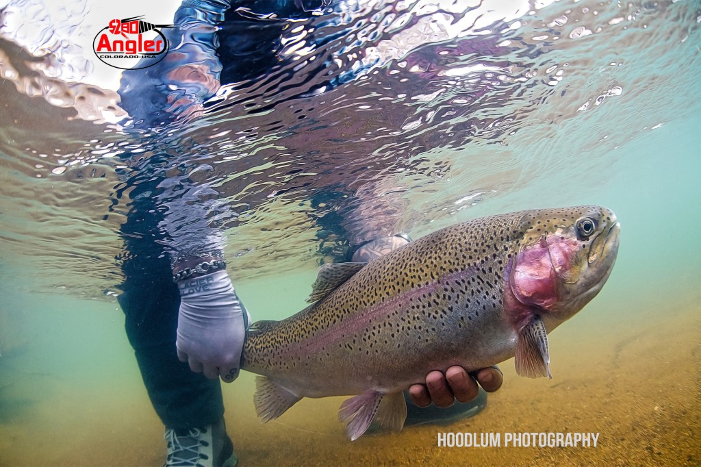 Catch And Release Underwater Trout.1