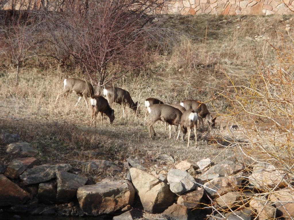 Deer 5-08.1